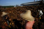 Asean Labor Flows Hit a Wall
