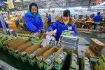 China Factory Growth Plummets