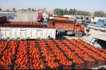 Iran Bans Tomato Exports Until Further Notice