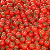 Over 210K Tons of Tomatoes Exported in  3 Months