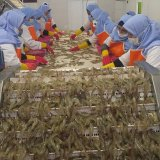 Iran's Golestan Receives Permit for Direct Shrimp Exports to Europe