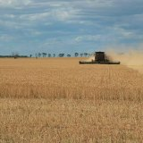 Land Under Wheat Cultivation Down 1.5%