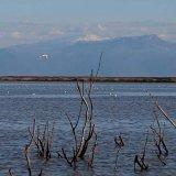 Alagol Wetland Well-Fed
