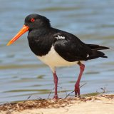 Rare Bird Sighted in Bushehr