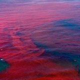 Chabahar Waters Overrun by Red Tide