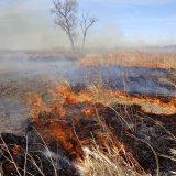 Fire Sweeps Through Hawizeh Marshes