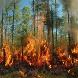 Northern Forest Fire Rages in Norouz