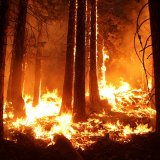 Iran's Forest Fires  on a Downtrend