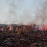 Fire Rips Through Miankaleh  Protected Area Once Again