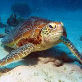 Southern Marine Ecosystems in Jeopardy
