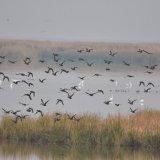 Wildlife Wetland Struggling Against Contaminants