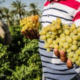 Iran Agrifood Exports Rise 25% to Earn $2 Billion in Four Months