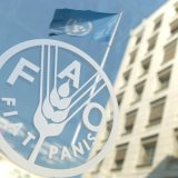 Agro Minister in FAO Conference