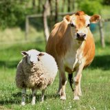 Farmed Animals Valued at $31b