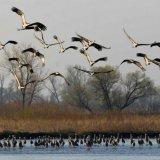 Birds Begin Migration to Astara