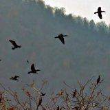 Bird Hunting Banned in Golestan