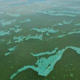 Harmful Algae Growth in Sea Waters