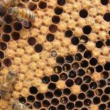 2059 Tons Honey