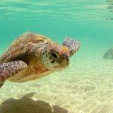 A Resort Along  Turtles' Beach