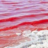 Persian Gulf Hit by Algal Bloom