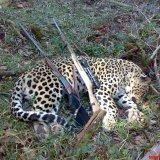 Ban on Hunting