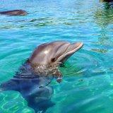 Kish Dolphinarium