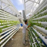 Japan Launches 1st Automated Farm