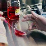 Biotechnology an Emerging Discipline