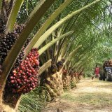Palm Oil Makes Weak Start
