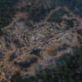 Deforestation Worsens in Amazon Rainforest