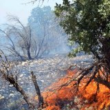 Summer Months Herald Frequent Forest Fires