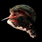 Ocean Acidification on Full Throttle