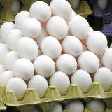 Iran's Per Capita Egg Consumption at 198