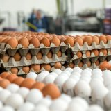 Each Iranian consumed 198 eggs on average in the last fiscal year to March 2017.