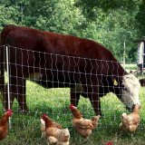 Livestock,Poultry Exports Rise