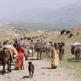 Nomads in Iran annually produce 190,000 tons of red meat, accounting for 25% of the domestic red meat production.