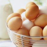 Egg Exports Hit by Bird Flu