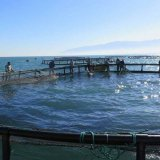 Cage Fish Farming Project Launched