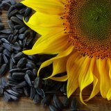 China Biggest Exporter of Sunflower Seeds to Iran