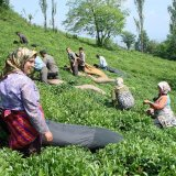 30,000 Tons of Tea Smuggled Annually