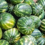 Watermelon Exports Exceed $97 Million