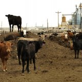 China Targets Farm Waste as Clean Energy Source