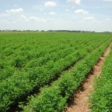 Two smart farming projects have been launched.