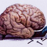 Brain Mapping Symposium in September