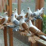 Trade of Ornamental Birds Banned