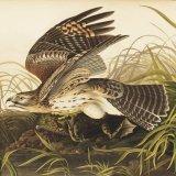 Auction of Audubon's Book on Birds Could Fetch $12m