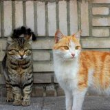 Like many other big cities across continents Tehran too has more than its share of feral cats.