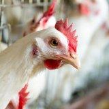 Bird Flu Kills 79 in China