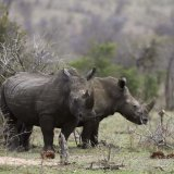 Africa Travel Industry Alarmed by Wildlife Losses