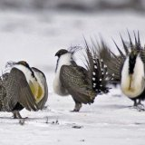 US Administration's Ban on Land Deals Could Hurt Beleaguered Bird